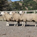 HL rams march ex NZ 2013